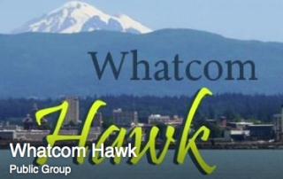whatcom hawk