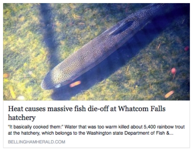 fish die off whatcom falls