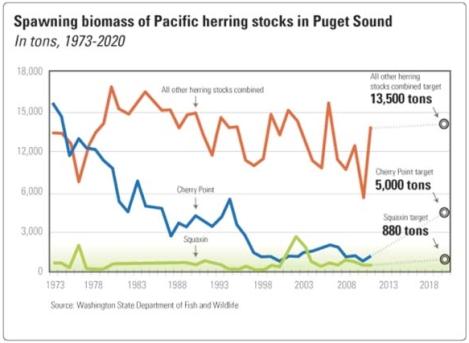 herring