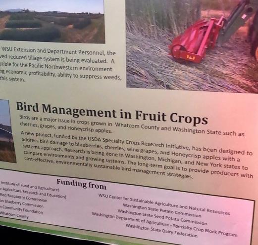 bird management fruit