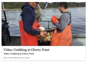 crabbing at cherry point
