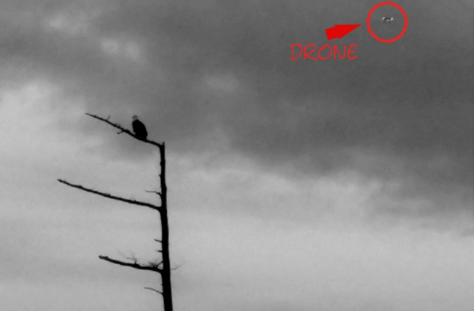 eagle and drone noted
