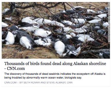 birds found dead