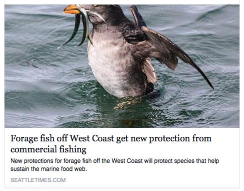 forage fish fellerman